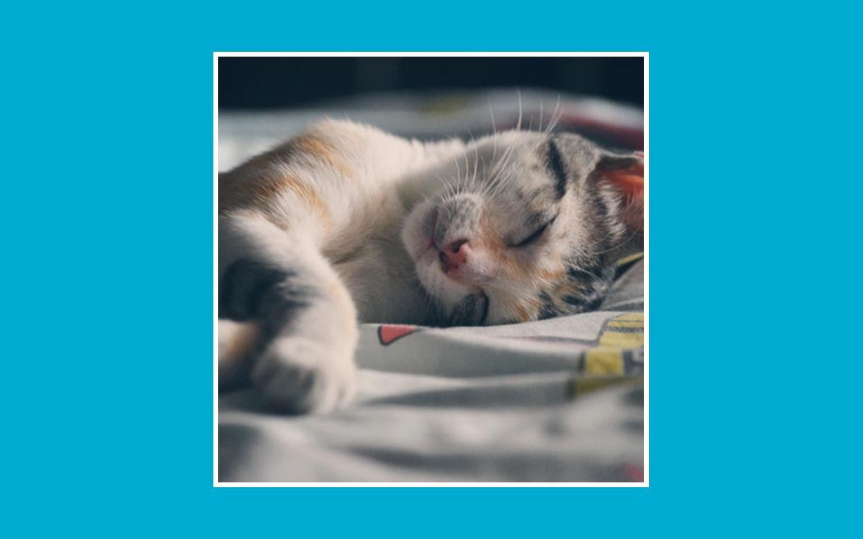 monitorizar sueño