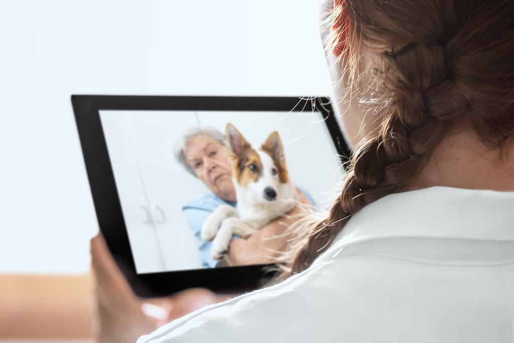veterinario por internet